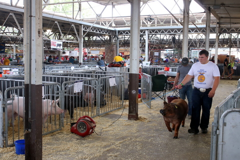 Iowa State Fair Swine Barn