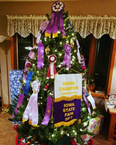 Cattle banners on the Christmas tree in Iowa